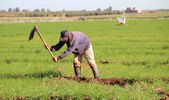 الدار البيضاء اليوم  - أكثر من 80 % من المغاربة يعتبرون أنّ تقنين القنّب الهندي سيكون له أثر إيجابي